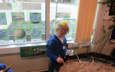 Dinosaur Museum and Shop opens in the Ladybirds