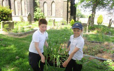 Tulips go gardening at St Alban's Church