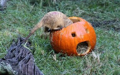 Pumpkins Please!