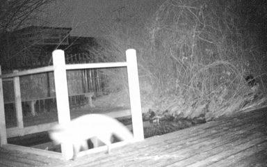 Nature Camera Update!