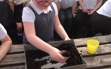 Owls investigate where can cress grow?