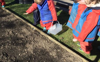 Planting poppy seeds and composting