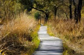 Nursery Nature Walk