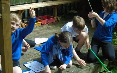 Year 5s go pond-dipping!