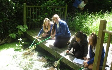 Year 6 – pond dipping!