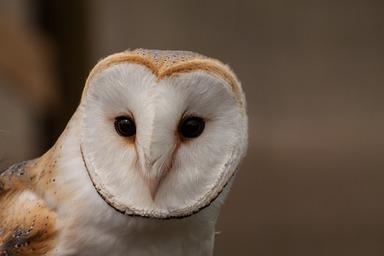 Owls (Y1/2)   Windy Nook Primary School